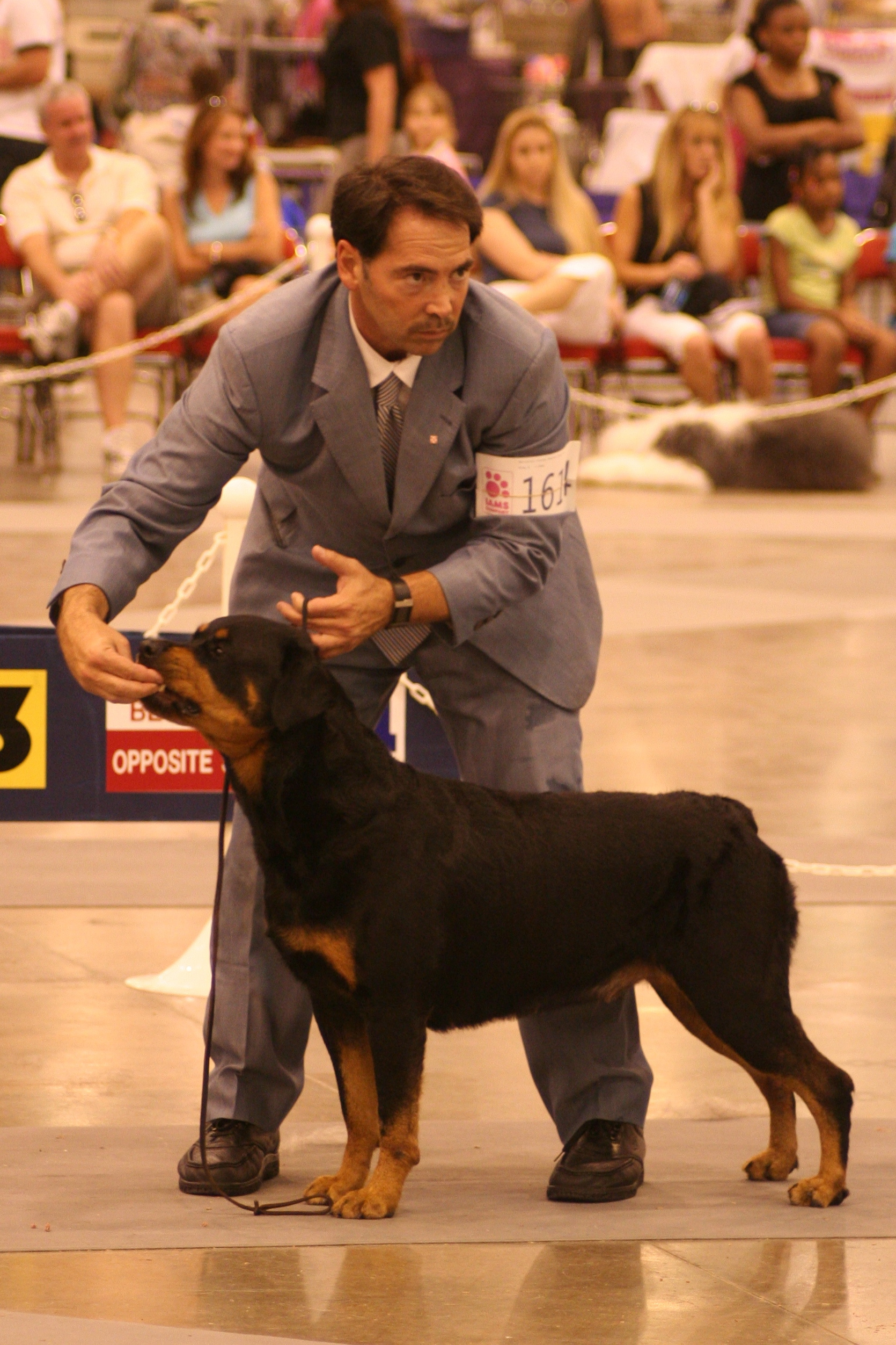 Best Food For Puppies >> Teach Rottweiler to Stay