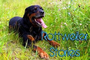 rottweiler stories