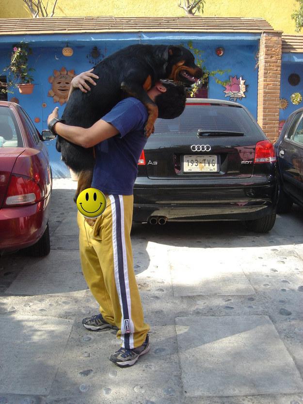 rottweiler carried