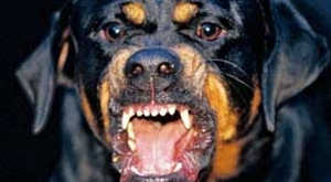rottweiler fear aggression
