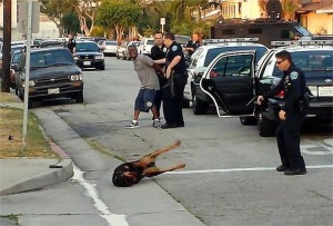 rottweiler shot by police in hawthorne-dog killed
