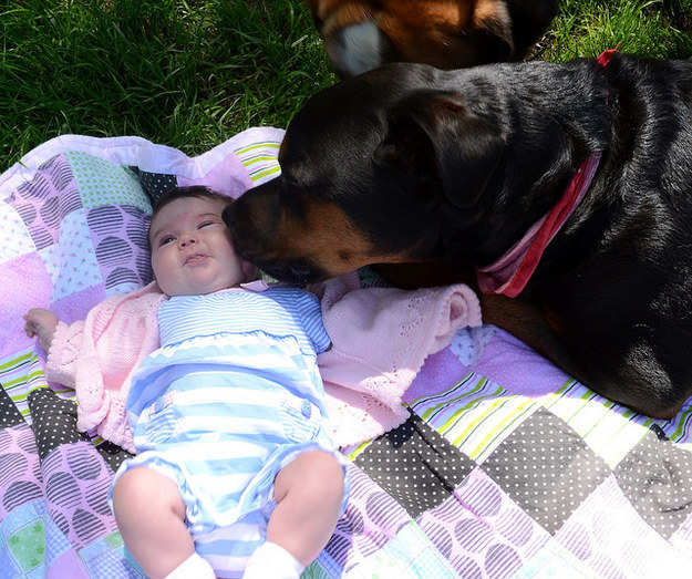 rottweiler with baby