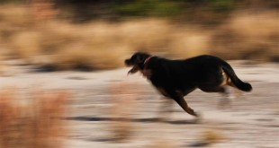 rottweiler-outdoor-activities