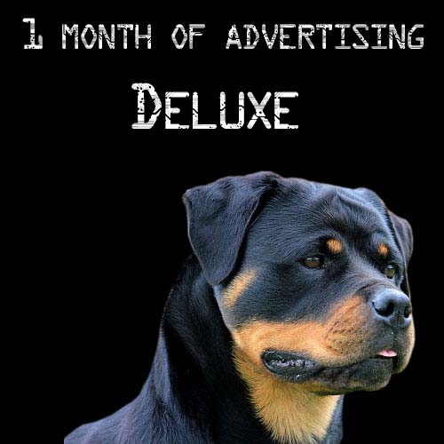rottweiler advertising for 1 month-deluxe