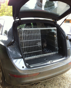 rottweiler car trip-rottweile crate