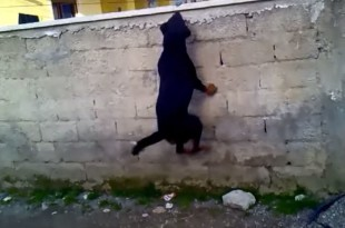 rottweiler hurdling over fence